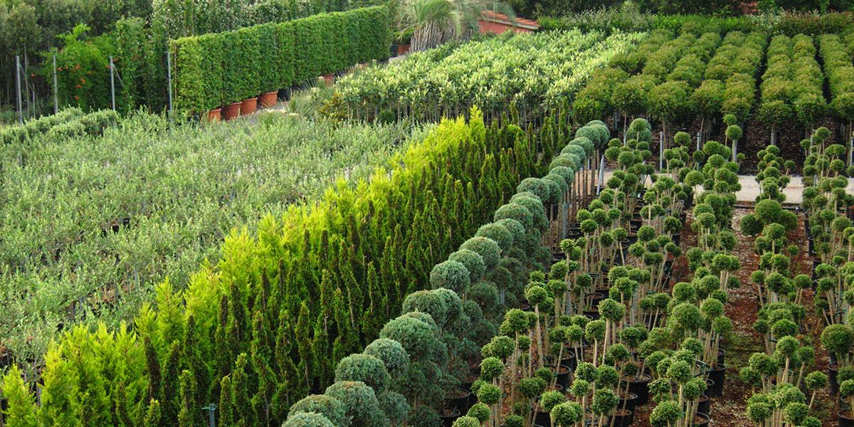 Vivaio daniele giardinievivai for Piante da vivaio